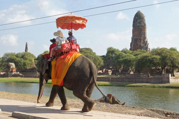 Elefant mit Touristen